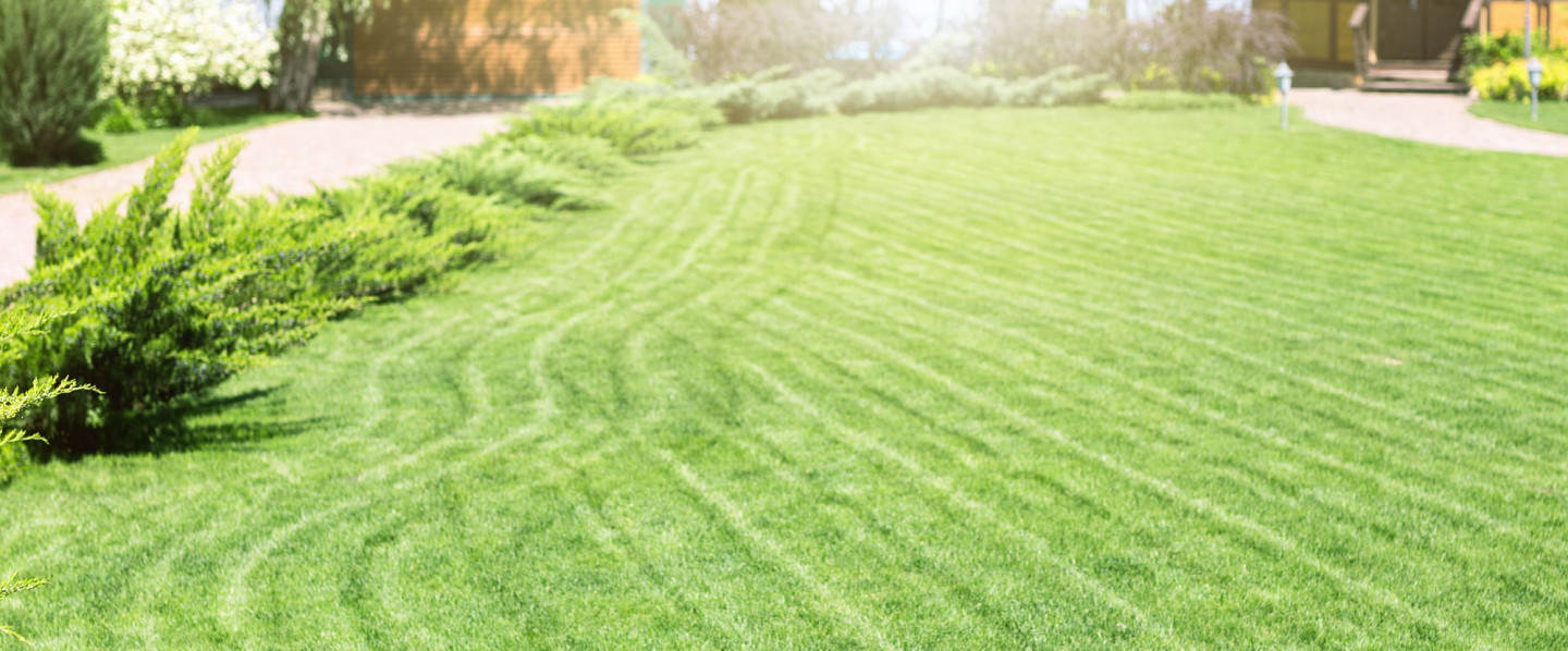 Hire a Reliable Landscaping Company in Tiffin, IA
